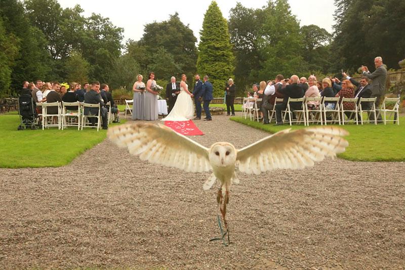 Auchen Castle Bonnie The Barn Owl, Wedding Venues Scotland